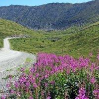 Дорога на перевал Саянский (Сотый) :: MaOla ***