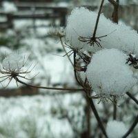 """Снежные """"паучки"""". :: Ivolga"""