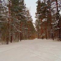 Сибирь . :: Мила Бовкун