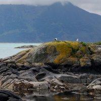 Большая морская черепаха :: Николай Танаев
