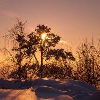 Дерево в морозном закате :: Сергей Тагиров