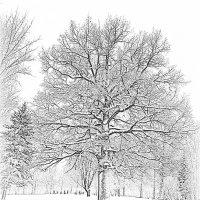 Одним росчерком зимы..... :: Tatiana Markova