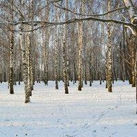 Просто лес :: Светлана Ларионова