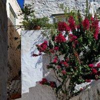 Остров Идра (Гидра), Греция, на улицах :: Владимир Брагилевский