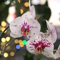 Ботанический сад им. Льюиса Гинтера (г.Ричмонд, США) :: Виктория
