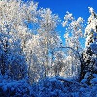 Притихший лес в наряде снежном... :: Владимир Буев