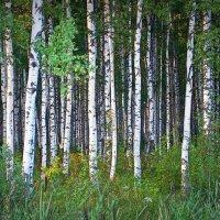 Заколдованный лес :: Фотогруппа Весна.