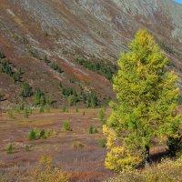 Осень на перевале Саянский(сотый) :: MaOla ***