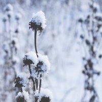 Зимняя красота :: Valentina