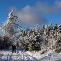 Селфи на память о зиме. :: Юрий. Шмаков