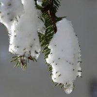 зима :: Сергей Короленко