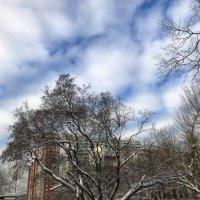Зима в городе. :: О. Ф.