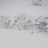 зимняя трава... :: Михаил Жуковский