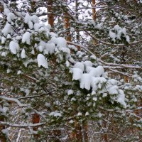 Ой , снег , снежок ! :: Мила Бовкун