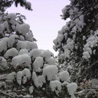 Снежный зоопарк на ветках. :: Мила Бовкун