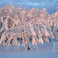 морозное утро :: павел бритшев