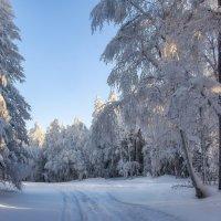 Зимняя сказка :: vladimir Bormotov