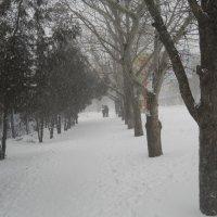 У нас снова пошёл снег... :: Галина