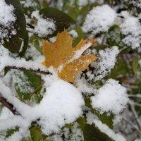 Ты мне среди зимы приснись... :: Ольга