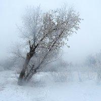 Сырость да туман ... ) :: Natali