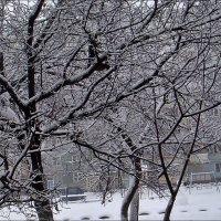 Снежный январь :: Нина Корешкова