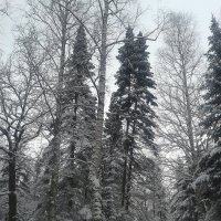 Зимняя красота :: Сапсан