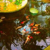 Рыбки :: Анна Былина