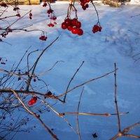 Красное на белом :: Наталья Гринченко