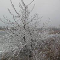 1 января  Каховское водохранилище :: Ирина Диденко