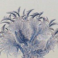 Морозный цветочек :: Марина