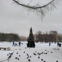 Зимний пейзаж с елочкой. (в Юсуповском саду). :: Светлана Калмыкова