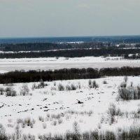 Белый снег. :: Светлана Громова
