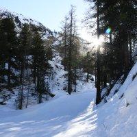 Альпийское солнце :: Мария Самохина