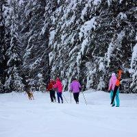 Лыжный сезон. :: Galina S*