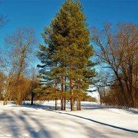 Старинный парк в зимнем очаровании... :: Sergey Gordoff