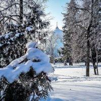 В зимнем парке словно в сказке... :: Копыткина Юлия