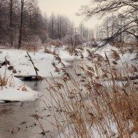 зимний камыш :: Александр Прокудин