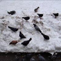 Зима для голубей :: Нина Корешкова