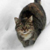Удивлённый кот. :: Светлана Громова