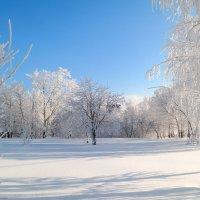 Ах эта роскошь января! :: Андрей Заломленков