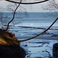 Одинокий лебедь :: Маргарита Батырева