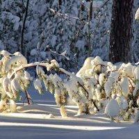Хозяином ночной был снегопад... :: Лесо-Вед (Баранов)