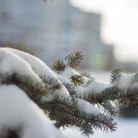 Ёлка в снегу :: Ирина Холодная