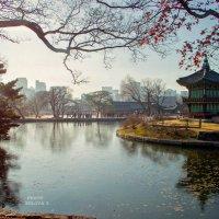 Gyeongbokgung, Seoul :: Tatyana Belova