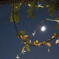 Орнамент луны :: Людмила Синицына