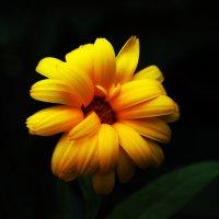 yellow flower :: Наталья ХХХХХ