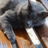 Настоящий греческий кот :: Владимир Брагилевский
