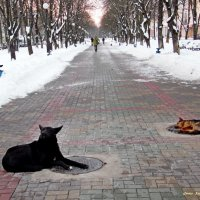 Зимой греются собаки :: Андрей Буховецкий