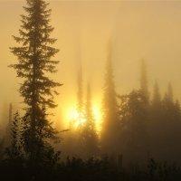 Солнце восходит в тумане :: Сергей Чиняев
