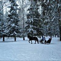 Лошадка мохноногая... :: Leonid Rutov